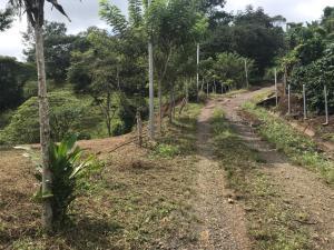 Terreno En Alquileren San Antonio, Puriscal, Costa Rica, CR RAH: 19-281
