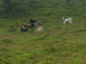 Terreno En Ventaen Tilaran, Tilaran, Costa Rica, CR RAH: 19-553
