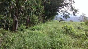Terreno En Ventaen San Luis, Alfaro Ruiz, Costa Rica, CR RAH: 19-864