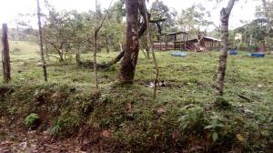 Terreno En Ventaen Puerto Viejo, Sarapiqui, Costa Rica, CR RAH: 20-213