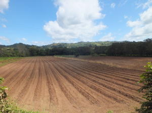 Terreno En Ventaen San Jose, Turrubares, Costa Rica, CR RAH: 20-267