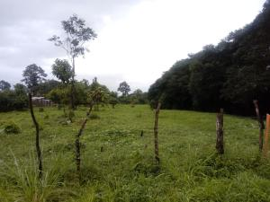 Terreno En Ventaen Guapiles, Pococi, Costa Rica, CR RAH: 20-363