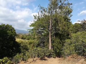 Terreno En Ventaen Chilamate, Poas, Costa Rica, CR RAH: 20-531