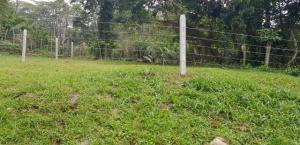 Terreno En Ventaen Guapiles, Siquirres, Costa Rica, CR RAH: 20-817