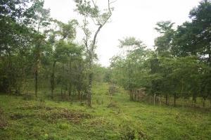Terreno En Ventaen La Fortuna, San Carlos, Costa Rica, CR RAH: 20-850