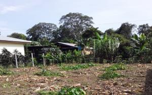 Terreno En Ventaen Guapiles, Pococi, Costa Rica, CR RAH: 20-1043