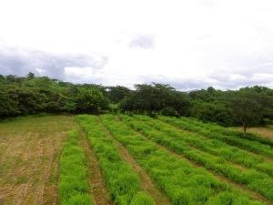 Terreno En Ventaen Huacas, Santa Cruz, Costa Rica, CR RAH: 20-1065