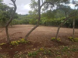 Terreno En Ventaen Buenos Aires, Palmares, Costa Rica, CR RAH: 20-1454