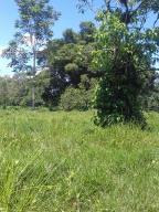Terreno En Ventaen Limon Centro, Guacimo, Costa Rica, CR RAH: 20-1564