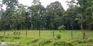 Terreno En Ventaen Guapiles, Pococi, Costa Rica, CR RAH: 20-1577