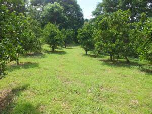 Terreno En Ventaen San Isidro, Atenas, Costa Rica, CR RAH: 20-1611