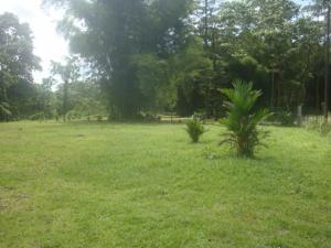 Terreno En Ventaen Sarapiqui, Sarapiqui, Costa Rica, CR RAH: 20-1741