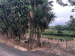 Terreno En Alquileren San Joaquin De Flores De Heredia, Flores, Costa Rica, CR RAH: 20-1776