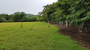 Terreno En Ventaen Sardinal, Carrillo, Costa Rica, CR RAH: 20-1949