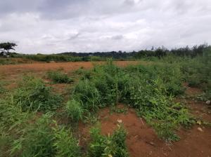 Terreno En Ventaen Tambor, Alajuela, Costa Rica, CR RAH: 20-2022