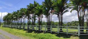 Terreno En Ventaen Guapiles, Pococi, Costa Rica, CR RAH: 21-27