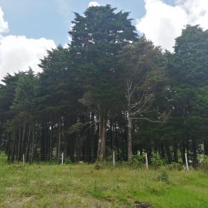 Terreno En Alquileren San Rafael, San Rafael, Costa Rica, CR RAH: 21-302