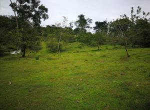 Terreno En Ventaen Santa Rosa, San Carlos, Costa Rica, CR RAH: 21-334