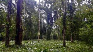 Terreno En Ventaen Puerto Viejo, Talamanca, Costa Rica, CR RAH: 21-458
