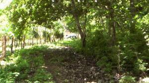 Terreno En Ventaen Carrillo, Carrillo, Costa Rica, CR RAH: 21-546