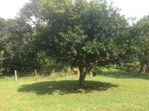 Terreno En Ventaen Santa Rita, Orotina, Costa Rica, CR RAH: 21-883