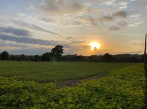 Terreno En Ventaen Miramar, Montes De Oro, Costa Rica, CR RAH: 21-961