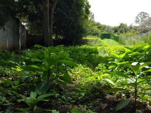 Terreno En Ventaen Rio Oro, Santa Ana, Costa Rica, CR RAH: 21-1130