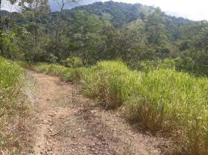 Terreno En Ventaen Bahia Ballena, Osa, Costa Rica, CR RAH: 21-1214