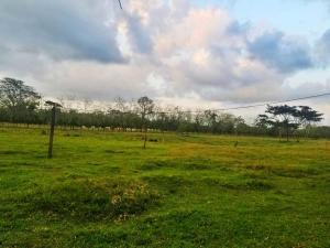 Terreno En Ventaen Guapiles, Guacimo, Costa Rica, CR RAH: 21-1485