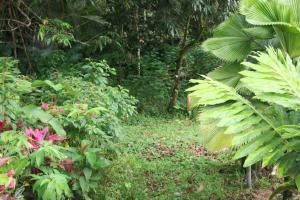 Terreno En Ventaen Guapiles, Pococi, Costa Rica, CR RAH: 21-1488