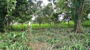 Terreno En Ventaen Guapiles, Pococi, Costa Rica, CR RAH: 21-1535