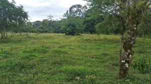 Terreno En Ventaen Laureles, Sarapiqui, Costa Rica, CR RAH: 21-1605