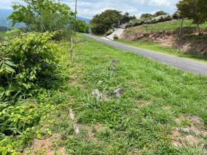 Terreno En Ventaen Orotina, Orotina, Costa Rica, CR RAH: 21-2042