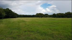 Terreno En Ventaen Sardinal, Carrillo, Costa Rica, CR RAH: 21-2053