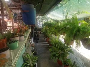 Casa En Alquileren Guapiles, Pococi, Costa Rica, CR RAH: 21-2338