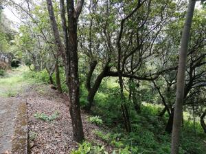 Terreno En Ventaen Orotina, Orotina, Costa Rica, CR RAH: 21-2381