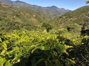 Terreno En Ventaen Desamparados, Desamparados, Costa Rica, CR RAH: 21-2424