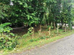 Terreno En Ventaen Puerto Viejo, Talamanca, Costa Rica, CR RAH: 21-2474