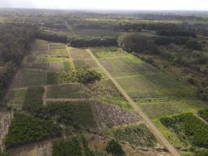 Terreno En Ventaen Guapiles, Pococi, Costa Rica, CR RAH: 22-81