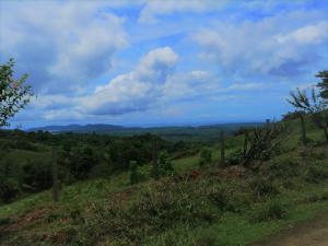 Terreno En Ventaen Potrero, Osa, Costa Rica, CR RAH: 22-516