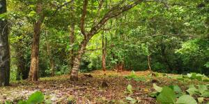 Terreno En Ventaen Puerto Carrillo, Hojancha, Costa Rica, CR RAH: 22-546