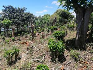 Terreno En Ventaen Corralillo, Cartago, Costa Rica, CR RAH: 22-582