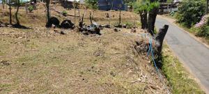 Terreno En Ventaen San Miguel, Grecia, Costa Rica, CR RAH: 22-623