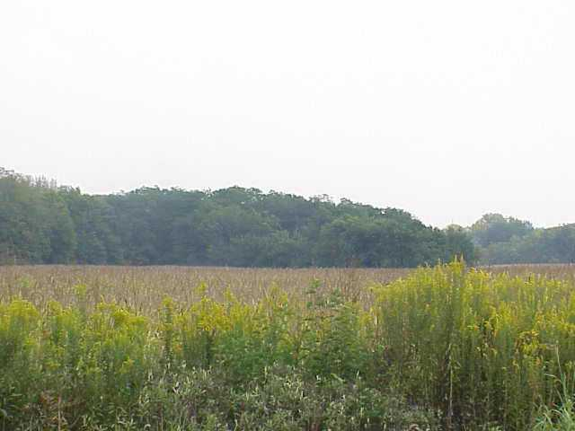 0 State Route 104, Commercial Point, Ohio 43116, ,Land/farm,For Sale,State Route 104,2436696