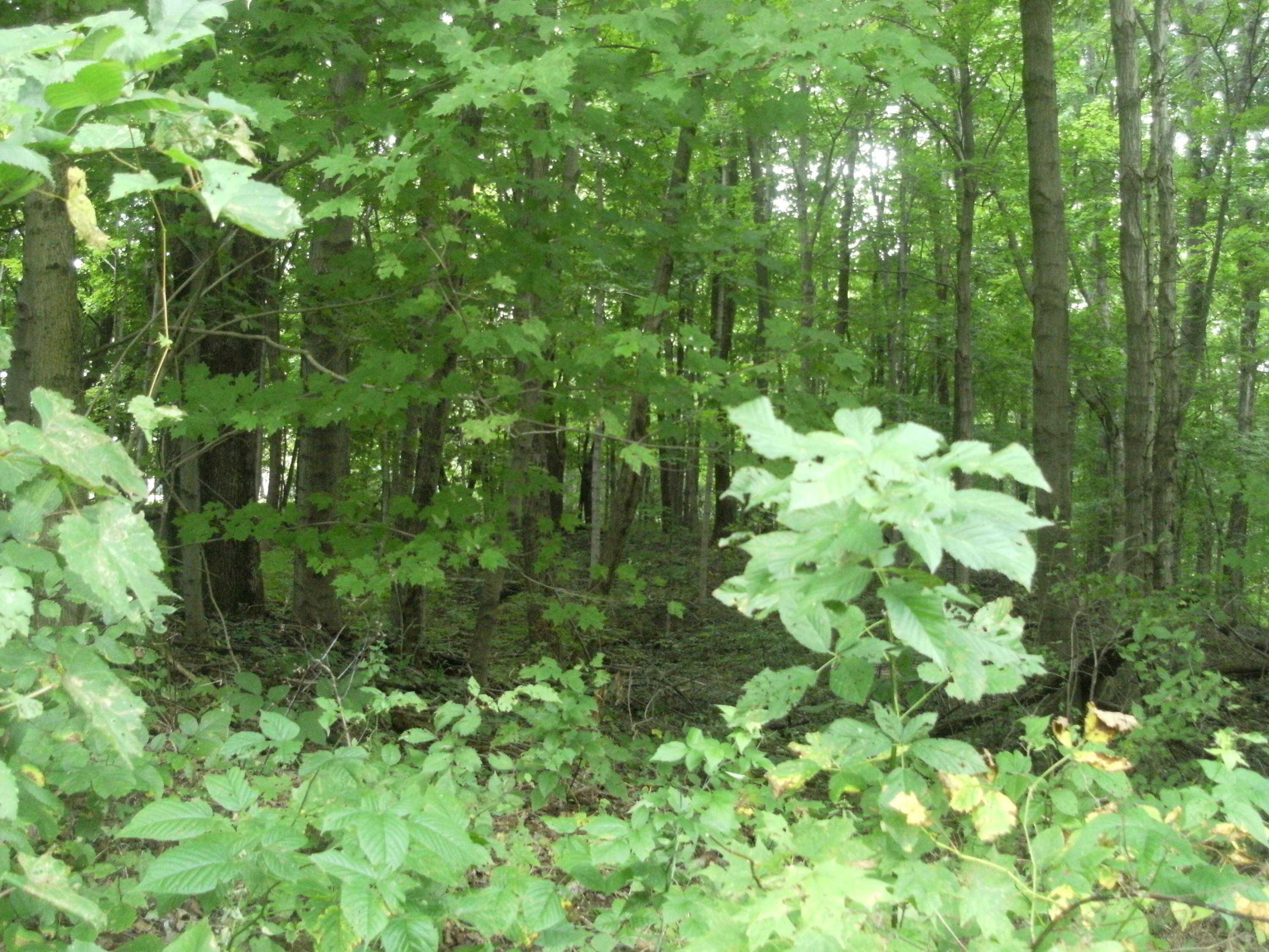 Wooded acreage