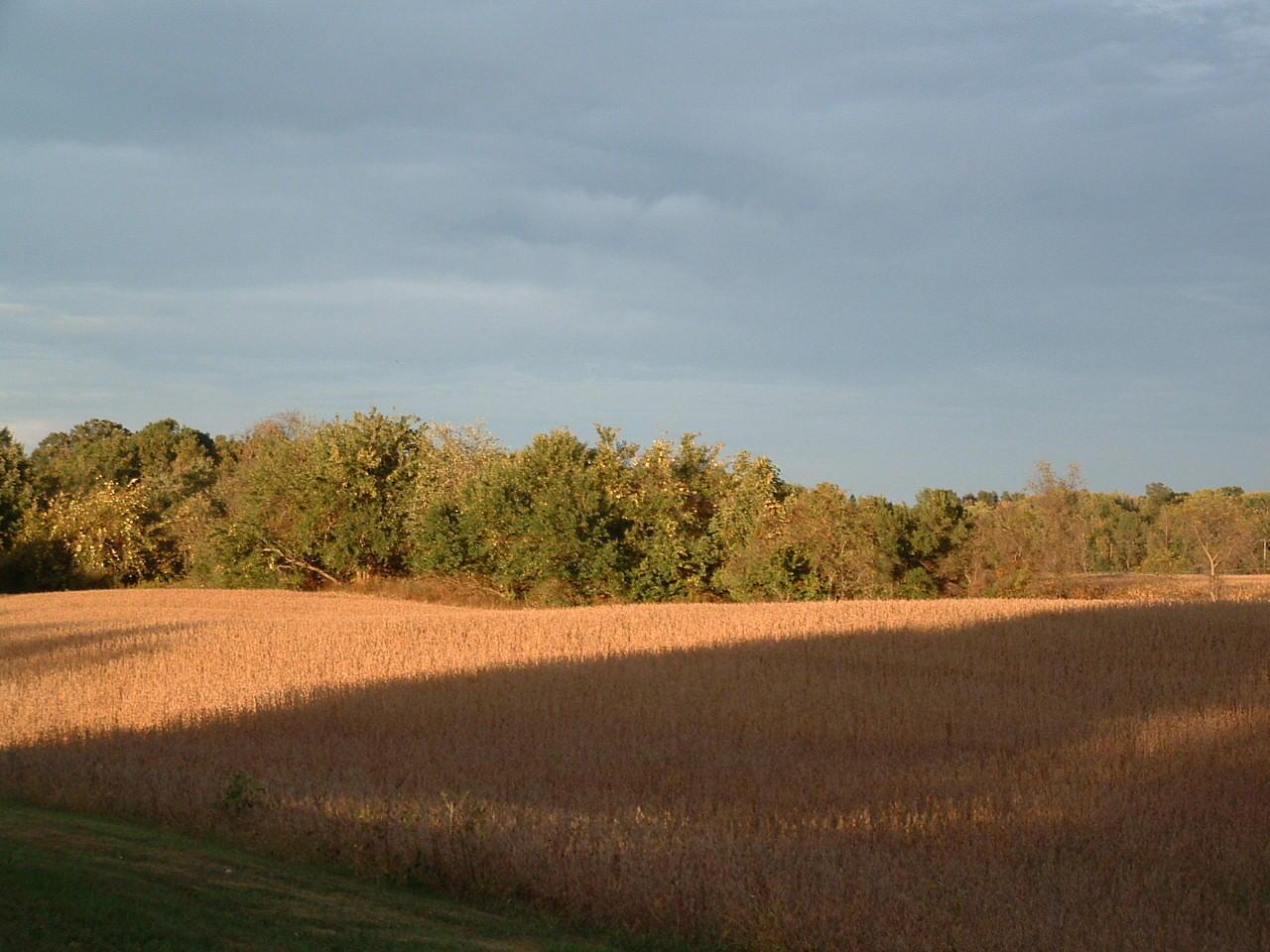 9370 Jug Road, Pataskala, Ohio 43062, ,Land/farm,For Sale,Jug,219038098
