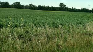 Undefined image of 0 Johnson Road, Lot 2, Marysville, OH 43040