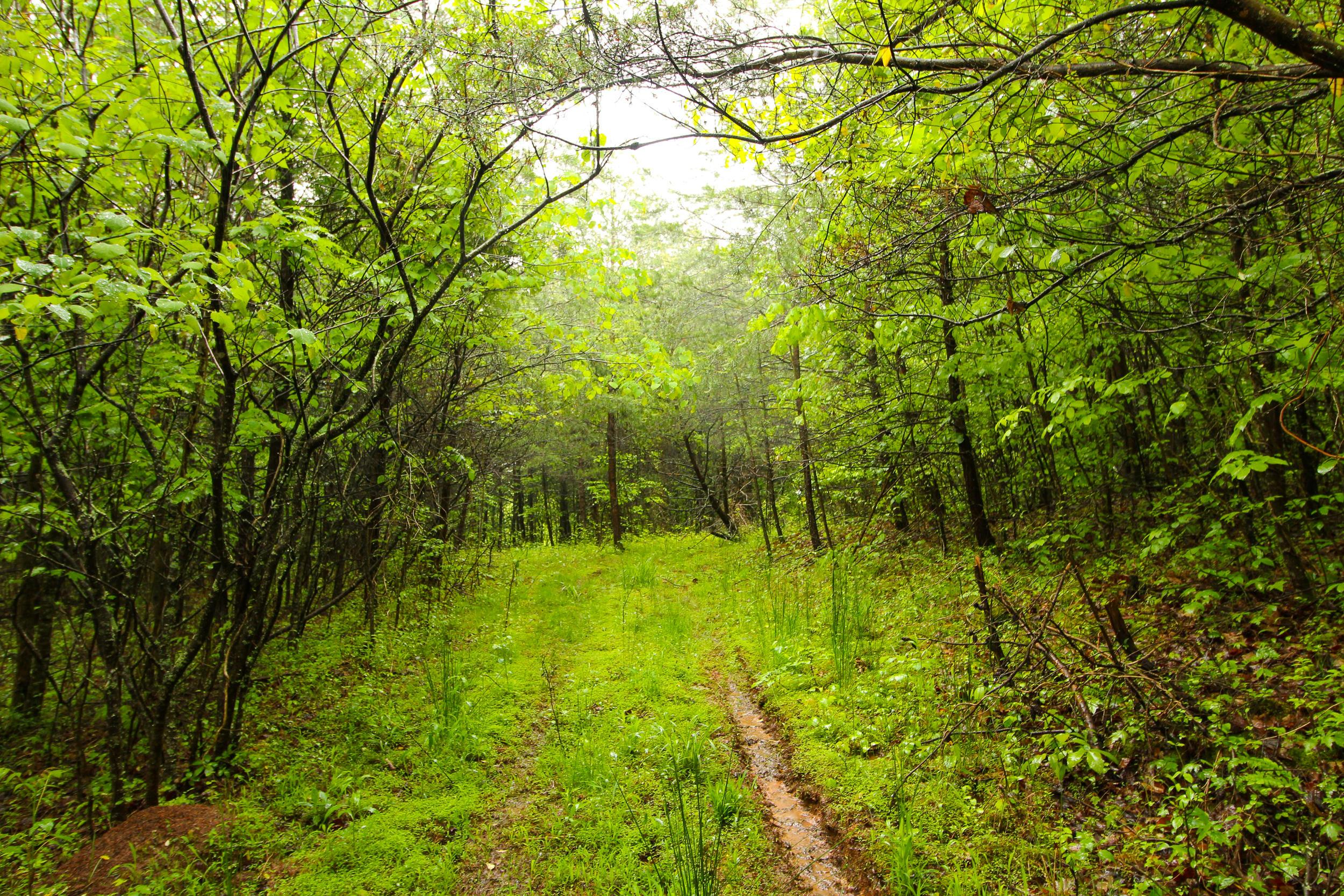 0 CR 64, Willow Wood, Ohio 45696, ,Land/farm,For Sale,CR 64,220016779