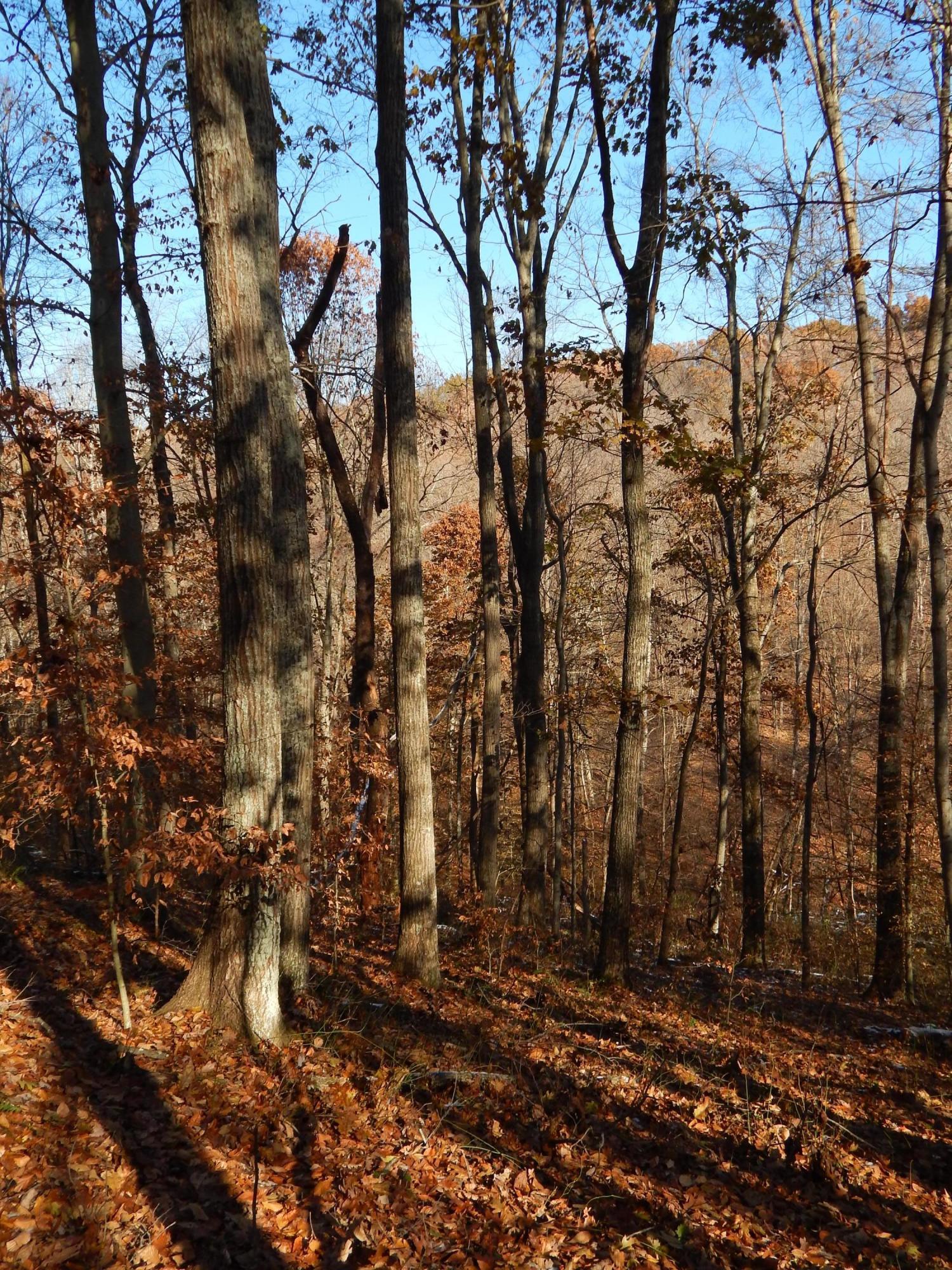 0 Bauer Road, Logan, Ohio 43138, ,Land/farm,For Sale,Bauer,220017331