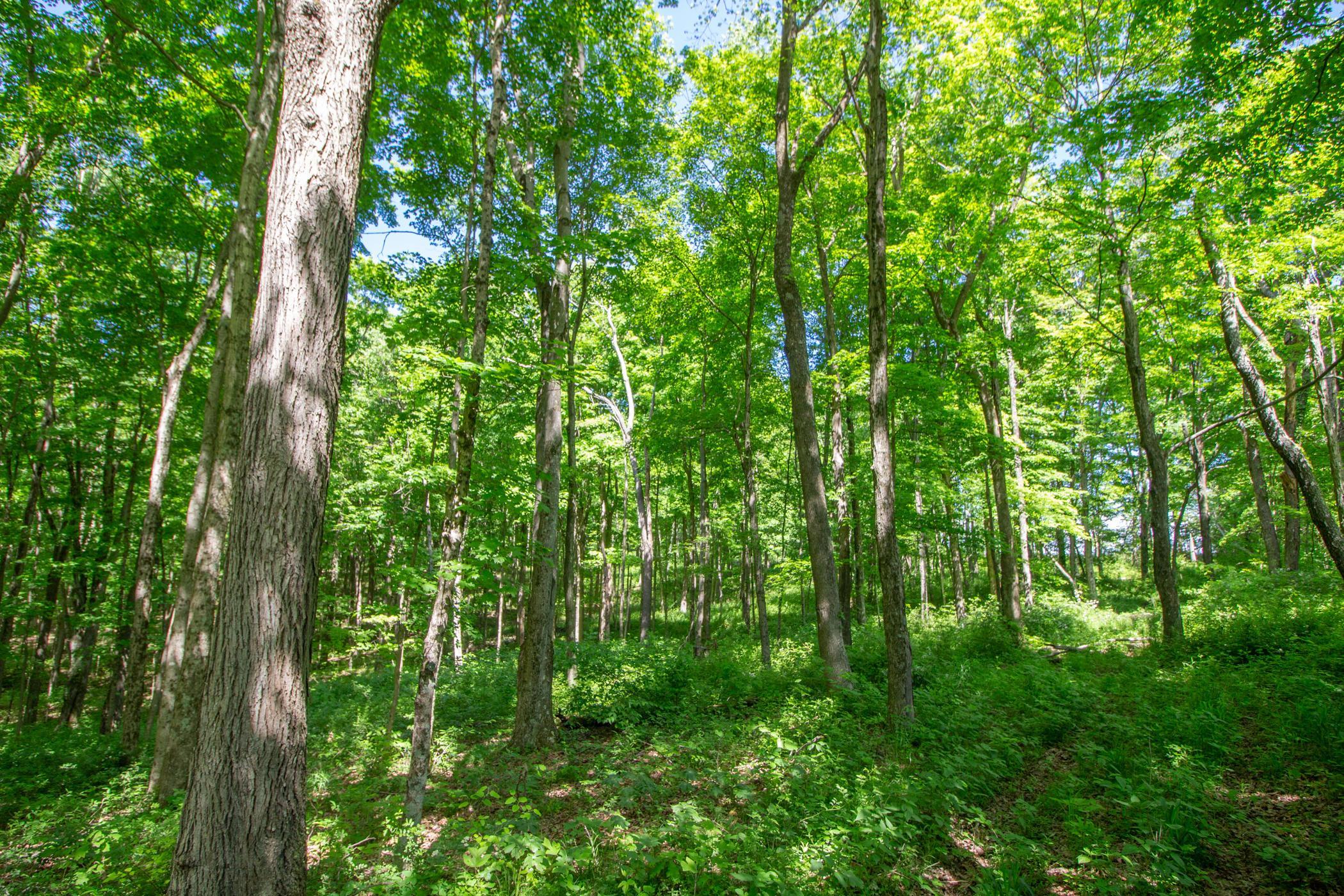 6347 Potts Hill Road, Bainbridge, Ohio 45612, ,Land/farm,For Sale,Potts Hill,220018956